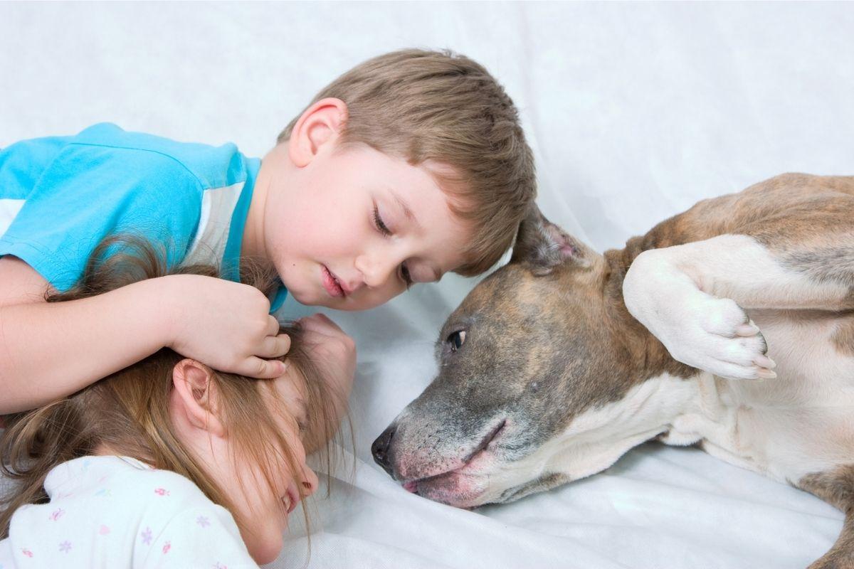 interação com cachorro